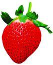 素材瓜果0250,素材瓜果,农业,草莓