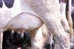 乳牛牧场0033,乳牛牧场,农业,乳头 动物 牧场
