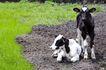 乳牛牧场0041,乳牛牧场,农业,奶牛 青草