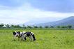 乳牛牧场0048,乳牛牧场,农业,