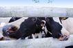 乳牛牧场0051,乳牛牧场,农业,
