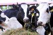 乳牛牧场0053,乳牛牧场,农业,