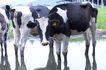 乳牛牧场0054,乳牛牧场,农业,