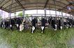 乳牛牧场0075,乳牛牧场,农业,牛棚 舒适 环境
