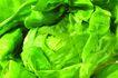 什锦鲜蔬0027,什锦鲜蔬,农业,包菜 卷心菜 蔬菜