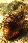 什锦鲜蔬0039,什锦鲜蔬,农业,芋头 香芋 农业