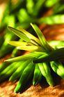 什锦鲜蔬0062,什锦鲜蔬,农业,苞谷 玉米 绿色