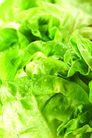 什锦鲜蔬0070,什锦鲜蔬,农业,青菜 菜叶 碧绿