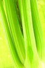什锦鲜蔬0073,什锦鲜蔬,农业,菜干 青绿 幼嫩