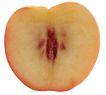 果脯0042,果脯,农业,水果剖面