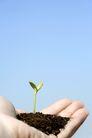绿叶幼苗0021,绿叶幼苗,农业,手掌 土壤 嫩苗