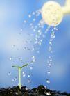 绿叶幼苗0023,绿叶幼苗,农业,喷壶 浇水 植物