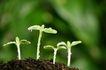 绿叶幼苗0025,绿叶幼苗,农业,幼苗 生长 春天