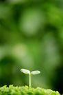 绿叶幼苗0026,绿叶幼苗,农业,豆芽 发芽 植物