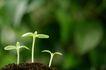 绿叶幼苗0027,绿叶幼苗,农业,土壤 肥沃 幼苗