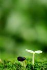 绿叶幼苗0028,绿叶幼苗,农业,种植 嫩叶 农业