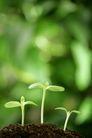 绿叶幼苗0029,绿叶幼苗,农业,植物 生命 高矮