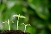 绿叶幼苗0030,绿叶幼苗,农业,