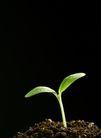 绿叶幼苗0038,绿叶幼苗,农业,