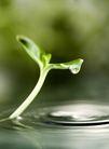 绿叶幼苗0042,绿叶幼苗,农业,露水 涟漪