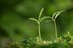 绿叶幼苗0044,绿叶幼苗,农业,春季绿芽