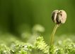 绿叶幼苗0046,绿叶幼苗,农业,发芽了