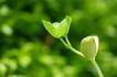 绿叶幼苗0050,绿叶幼苗,农业,嫩绿苗儿
