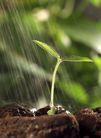 绿叶幼苗0051,绿叶幼苗,农业,泥土中 绿芽儿 雨水浇灌