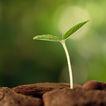 绿叶幼苗0053,绿叶幼苗,农业,