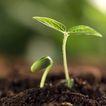绿叶幼苗0054,绿叶幼苗,农业,