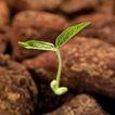 绿叶幼苗0055,绿叶幼苗,农业,
