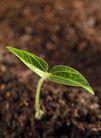 绿叶幼苗0056,绿叶幼苗,农业,