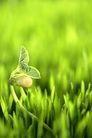 绿叶幼苗0059,绿叶幼苗,农业,