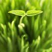 绿叶幼苗0061,绿叶幼苗,农业,嫩苗 绿色 生长