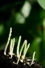 绿叶幼苗0063,绿叶幼苗,农业,发芽 泥土 农业