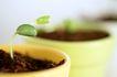 绿叶幼苗0065,绿叶幼苗,农业,豆苗 培养 器皿