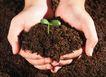 绿叶幼苗0068,绿叶幼苗,农业,双手 幼苗 土地