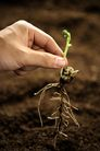 绿叶幼苗0069,绿叶幼苗,农业,手指 根茎 植物