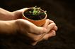绿叶幼苗0070,绿叶幼苗,农业,花盆 新芽 种植