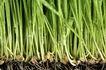 绿叶幼苗0072,绿叶幼苗,农业,