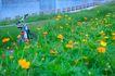 亲子休闲脚踏车0021,亲子休闲脚踏车,休闲,野花 花丛 单车