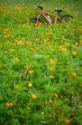 亲子休闲脚踏车0031,亲子休闲脚踏车,休闲,花卉 花圃 自行车