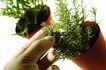 生化科技0071,生化科技,医疗,植物 陪育 品种
