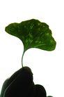 生化科技0078,生化科技,医疗,黑叶 萌发 嫩芽