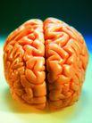 生化科技0115,生化科技,医疗,脑细胞 指挥中心 左右脑