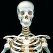 生化科技0117,生化科技,医疗,头颅 肋骨 脊梁