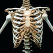 生化科技0118,生化科技,医疗,胸骨 骨骼 医学研究