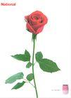 服饰美容品广告0050,服饰美容品广告,广告,一朵花