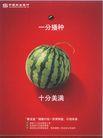 金融保险广告0016,金融保险广告,广告,西瓜 夏天 解渴 美满 水果