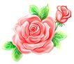 玫瑰,恭贺庆典,时尚卡通,红色 玫瑰 绽开